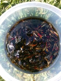 Get Rid Of Pincher Bugs Naturally
