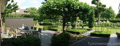Stijlvol terras met Buxusblokhagen, stamrozen en dakplataan www.Tuinmeesters.com