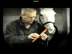 Horse Plays The Flute Using Nose - #cute