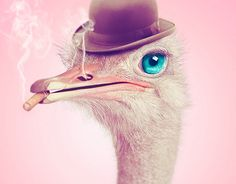 """The """"Smoking Ostrich"""" is the result of the arrangement of four different images.From these elements, I designed a rough of the final image. In order to obtain the desired result, I opened the beak of the bird to make room for the cigar, and then gave an…"""