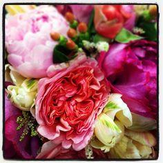 Acesflowers.com Peony garden rose bb #Padgram