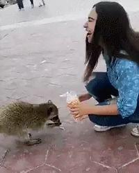 funny animals can't stop laughing ; funny animals videos can't stop laughing ; funny animals with captions ; Cute Funny Animals, Cute Baby Animals, Funny Cute, Animals And Pets, Hilarious, Animal Antics, Animal Jokes, Cute Animal Videos, Funny Animal Pictures