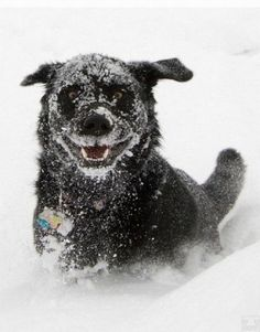 I love the borderline crazy face of a dog having fun in the snow.