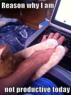 You know something up, when your cat doesn't want you to see his search history.....Evil!!!