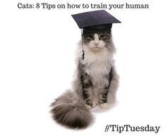 #tiptuesday Be sure you get enough rest most energy will be devoted to coaching your human http://petstayadvisor.com.au/article/Cats-8-Tips-How-to-Train-Your-Human
