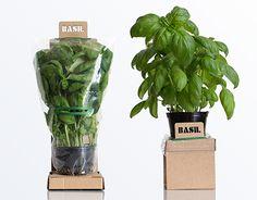 Vedi questo progetto @Behance: \u201cSelf-Watering Herbs\u201d https://www.behance.net/gallery/15696495/Self-Watering-Herbs