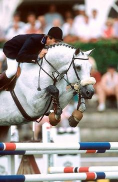 Franke Sloothaak & Corrado I All The Pretty Horses, Beautiful Horses, Horse Pictures, Animal Pictures, Warmblood Horses, Dream Barn, Hunter Jumper, Horse Stables, Show Jumping