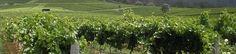 Hamilton Oaks Vineyard      31111 Hamilton Trail      Trabuco Canyon, CA 92679  Phone      California Wine  Web      www.hamiltonoaksvineyard.com