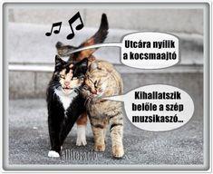 YourLike - Találd meg régi ismerőseidet nálunk! Animals And Pets, Funny Animals, Funny Memes, Jokes, Love Pet, Funny Photos, Haha, Have Fun, Kittens