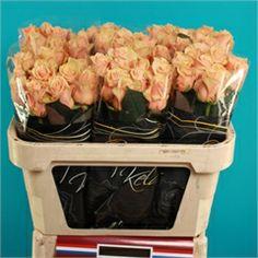 Real Rose Prima Donna  £1.06 per stem