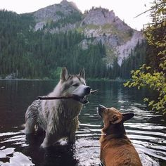 Siberian Husky | Tumblr