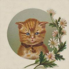 Victorian orange tabby cat and daisies