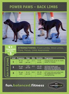 Integrate instability training to develop strength, endurance, proprioception, balance and flexibility with the new K9FITbone™