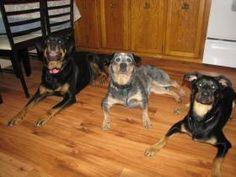 Riley, Annie, And Lexie