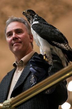 Taima the Seahawk visits the state Legislature  - so bummed I missed this day! (I was busy with a newborn)