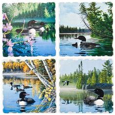 Loons In The Lake 4 Pack Coaster Set