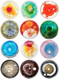 Petri dish   Microorganisms