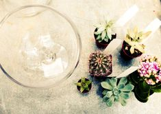 DIY Terrariums with Terrain