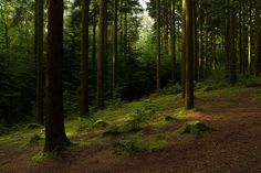 Pine Scented by @Miles Wolstenholme, via Flickr
