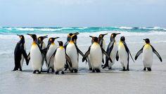 Pursuing The Penguins