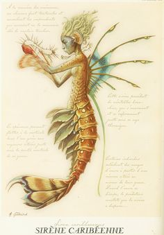 Tony Diterlizzi's scientific drawing of a merperson