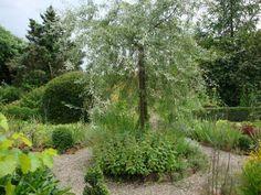 Minigärtchen - Seite 81 - Gartengestaltung - Mein schöner Garten online