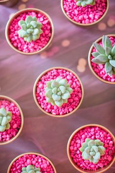 DIY these cute neon succulent planters for your bridesmaids.
