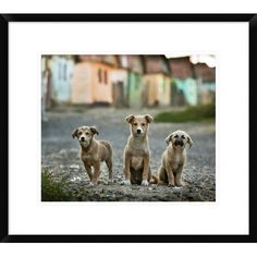 "Global Gallery 'The Three Musketeers' by Sorin Onisor Framed Photographic Print Size: 19"" H x 22"" W x 1.5"" D"