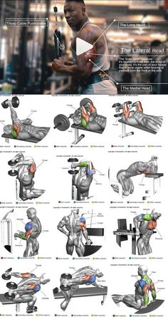 How to enlarge the triceps ?How to enlarge the triceps – # increased ?How to enlarge the triceps ?How to enlarge the triceps – # increased Fitness Workouts, Gym Workout Tips, Biceps Workout, Strength Training Workouts, Shoulder Workout Routine, Best Chest Workout, Chest Workouts, Bodybuilding Training, Bodybuilding Workouts
