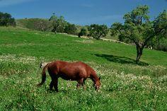 Spring range...beautiful horse!
