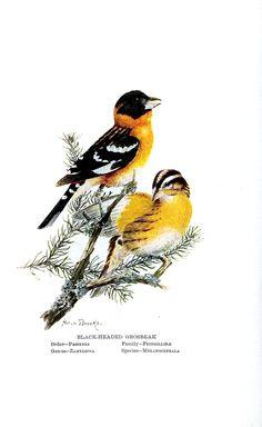 Vintage bird prints for home decor.