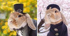A Tokyo (Japon), une mini-star a vu le jour. Et il s'agit de PuiPui, le lapin le plus élégant au monde...