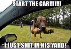 Funny pictures :: dog :: memes / funny pictures & best jokes: comics, images, video, humor, gif animation - i lol'd Funny Kid Memes, Funny Quotes For Kids, Funny Pictures For Kids, Funny Jokes For Adults, Funny Animal Quotes, Super Funny Quotes, Funny Animal Pictures, Funny Photos, Funny Animals