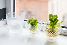 I Quit Sugar - An endless supply of celery? Here's 4 ways to regrow your veggies Regrow Vegetables, Root Vegetables, Veggies, Growing Vegetables, Cooking Onions, Old Farmers Almanac, Turnip Greens, Plant Diseases, Cottage Style Decor