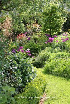 Ein Schweizer Garten: Purpur-Wunderkugeln - Der Zierlauch