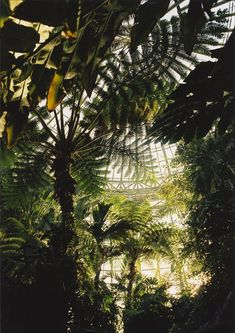 Tropical flora in a domed greenhouse.