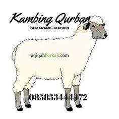 kambing Qurban Gemarang Madiun / 085853444472 (Call, SMS, WA) Head Office: Jl. Raya Baron Timur No.1 Baron Nganjuk http://www.qurban-aqiqah.com/harga-kambing-qurban-gemarang-madiun.html