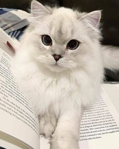Cute Baby Cats, Cute Cats And Kittens, Cute Little Animals, Kittens Cutest, Pretty Cats, Beautiful Cats, Beautiful Things, Beautiful Pictures, Funny Cats