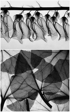 X-ray art by Steven N. Meyers