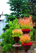 Firesticks at Solar Gardens