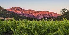 Estate Vineyards - Cliff Lede Vineyards.@cliffledevineyards.@Leading Wineries of Napa.
