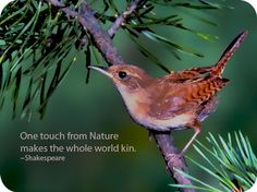 Celtic Meanings: Wren Symbolism in the Celtic culture deals has a light-hearted spin. This bird is a symbol of joy, hope and renewal. Animal Spirit Guides, Spirit Animal, Celtic Meaning, Old Farmers Almanac, Work With Animals, Small Birds, Wild Birds, Bird Watching, Bird Houses