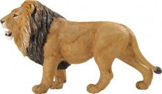 Lion (Wildlife Wonders)
