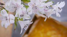 Honeycomb, Plants, Honeycombs, Plant, Honeycomb Pattern, Planets