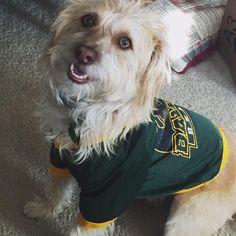 Every #BaylorProud dog needs a Baylor shirt!