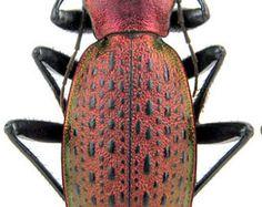 Insumos para sus obras de arte  insectos por Alanscollectibles