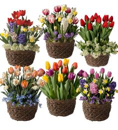 Fill six months of the year with spectacular floral displays. Our fragrant and cheerful Flower Bulb Gift Gardens are a wonderful way to add fresh flowers to someone's day, from December through May. #flowergarden #flowergifts #giftsforgardeners #giftsforher