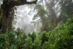 Bisate Lodge - gorilla trekking in Rwanda Volcano National Park, National Parks, Gorilla Trekking, Destinations, African Safari, Experiential, Niagara Falls, Waterfall, Country Roads