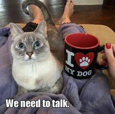 we need to talk.... seriously :-) #funnydogpictures