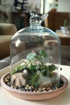 Colorful Terrarium Ideas DIY Colorful Terrarium Ideas - I like the saucer with pebbles as a base, bird shaped knob on cloche is nice too.DIY Colorful Terrarium Ideas - I like the saucer with pebbles as a base, bird shaped knob on cloche is nice too. Terrariums Diy, How To Make Terrariums, Terrarium Plants, Succulent Terrarium, Succulents Garden, Indoor Garden, Indoor Plants, Terrarium Design, Plant In Glass